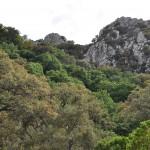 02_Sierra del Aljibe_DSC_0539