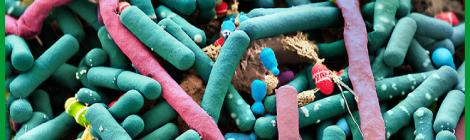 Estructuras de la complejidad y órdenes intermedios: del suelo a la microbiota intestinal