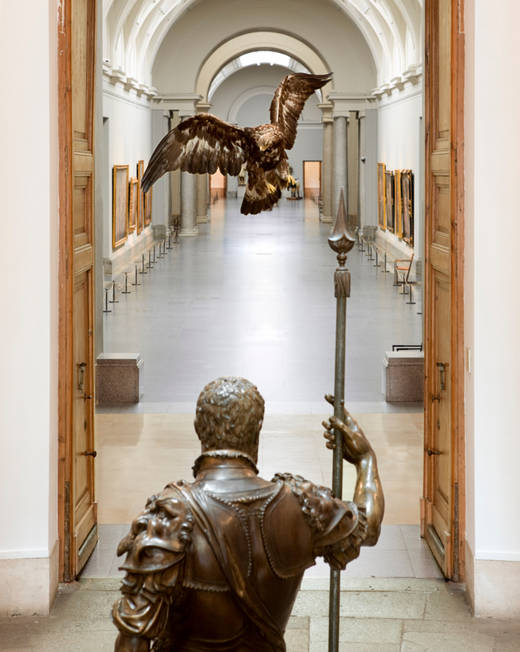 Águila Real, MNCN – CSIC Foto: Pedro Albornoz/Museo Nacional del Prado
