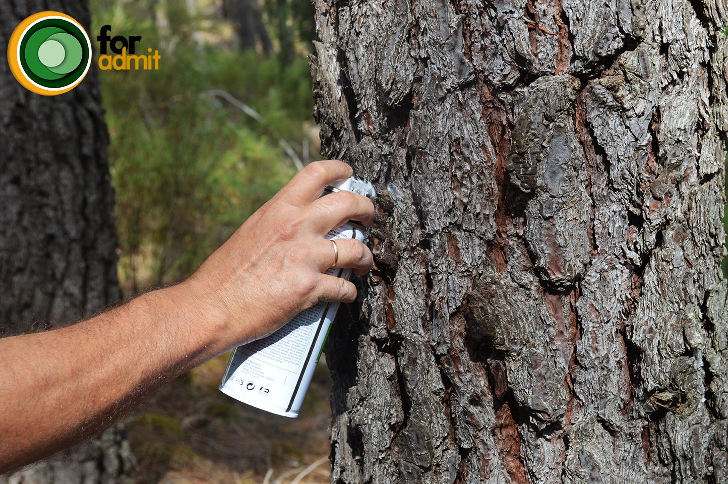 Señalamiento de árboles