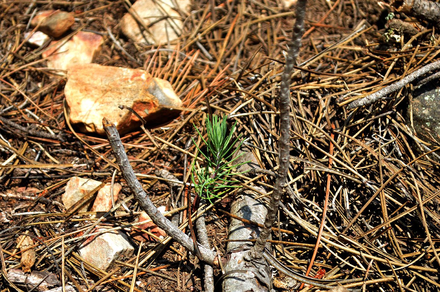 Regenerado en bosquetes en otoño 2018 tras las cortas de invierno 2017/18