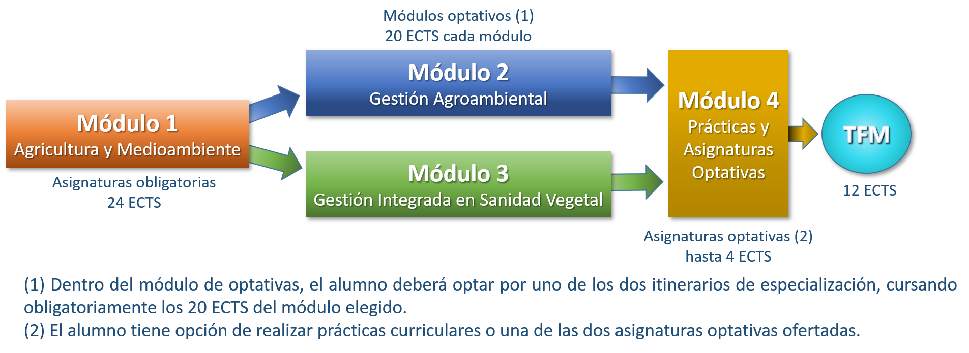 Estructura Máster Universitario T A P A S