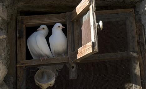 Fotografía: Dos palomas en El Valero.
