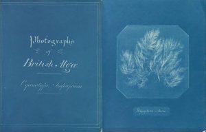 Photographs British Algae