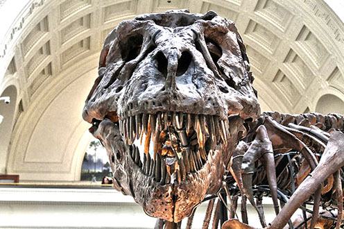 dinosaurio AR